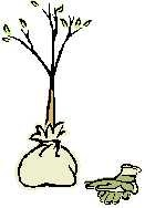 treeplant_000.jpg