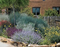xeriscaped yard