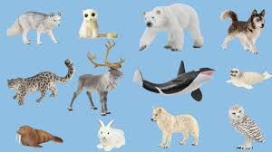 Stories & Music in the Sky - ARCTIC ANIMALS
