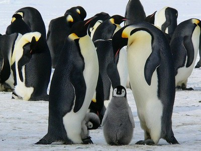 Stories & Music in the Sky Virtual Story Time - Penguins