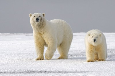 Stories & Music in the Sky Virtual Story Time - Polar Bears