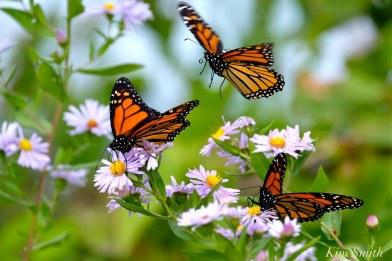 ButterfliesPhoto.jpg