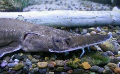 RioGrandeExhibitFish