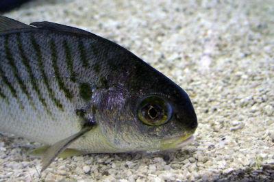 GulfCoastFish