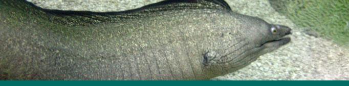 Eel banner