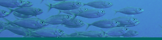 Banner_SchoolingFish