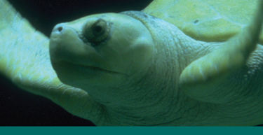 Sea Turtle banner