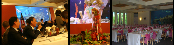 Rent the Shark Reef Cafe for your next corporate event.