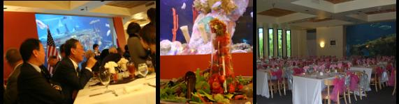 Shark Reef Cafe Rental
