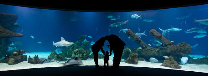 Family at Shark Tank