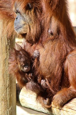 Mother's Day Discovery at the Zoo