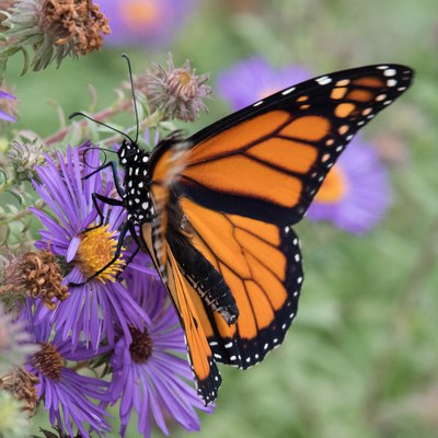 Pollinator Brown Bag: It Takes Two to Tango - POSTPONED