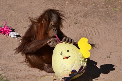 Spring Fling Enrichment at the Zoo