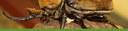 Beetle Banner