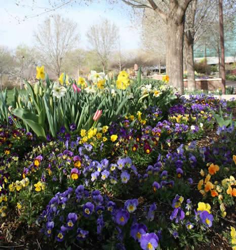 Rio Grande Botanical Gardens