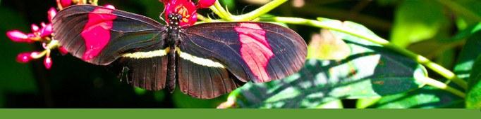 Anne, Botanic Garden Docent Banner