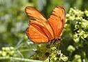 bg_butterfly2.jpg