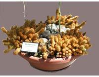 bg_cactus.jpg