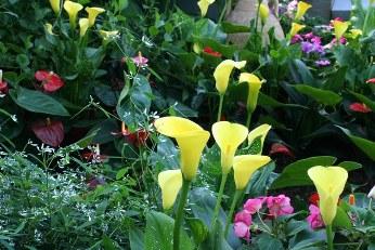 Bulbs in Bloom 2013