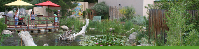 Dragonfly Sanctuary Pond Banner