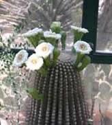 saguaroweb.jpg