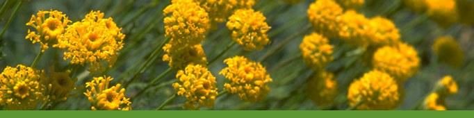 Yellow Flowers banner