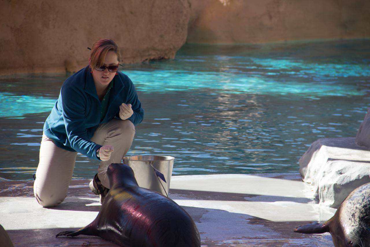 Seals feeding