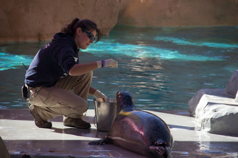 Seals and Sea lions training