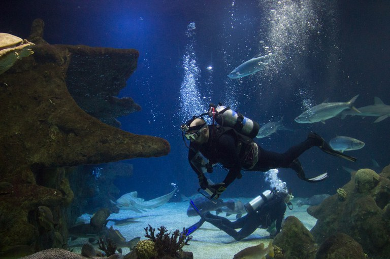 Divers feeding animals in Aquarium ocean tank/shark tank