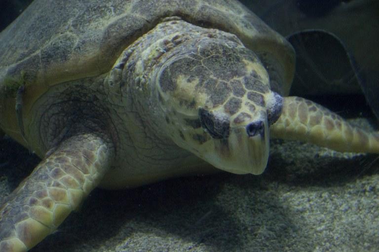 sea turtle 2015