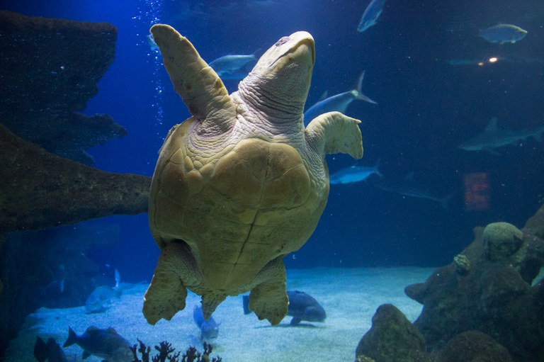 sea turtle at aquarium