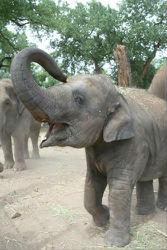 ElephantPagePhoto(5_2013)