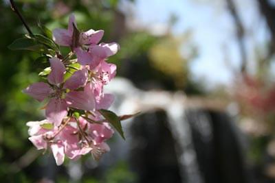 Japanese Garden Blooms