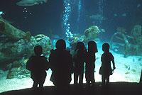 Aquarium-9.jpg