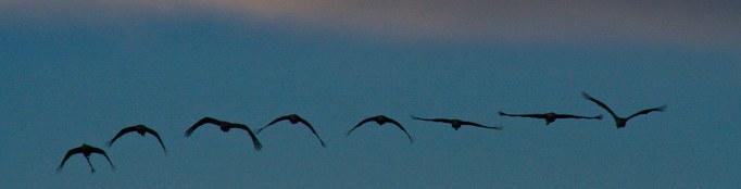 birds flying banner