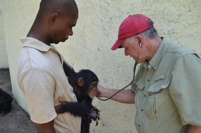 caption:Dr. Zimmerman examines a chimp