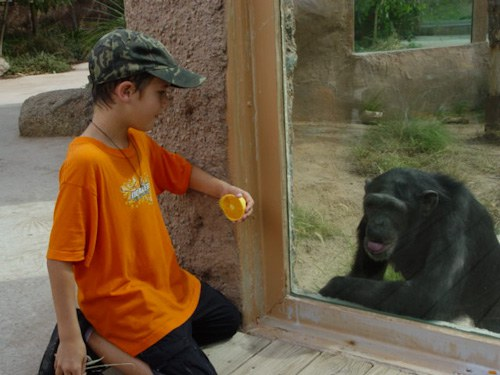 Explore the Zoo