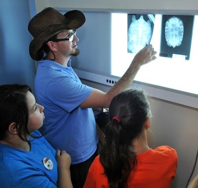Investigating Wild Careers-Veterinarian x-ray