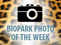 Photo of the Week Icon