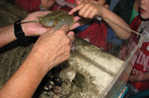 Touchpool volunteers teach visitors about marine invertebrates.