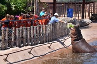 caption:A Camp BioPark class joins a keeper for hippo feeding time.
