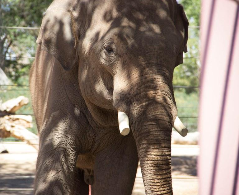 Albert Elephant
