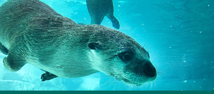 River Otters Page Banner