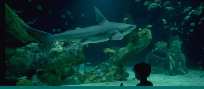 Aquarium page banner