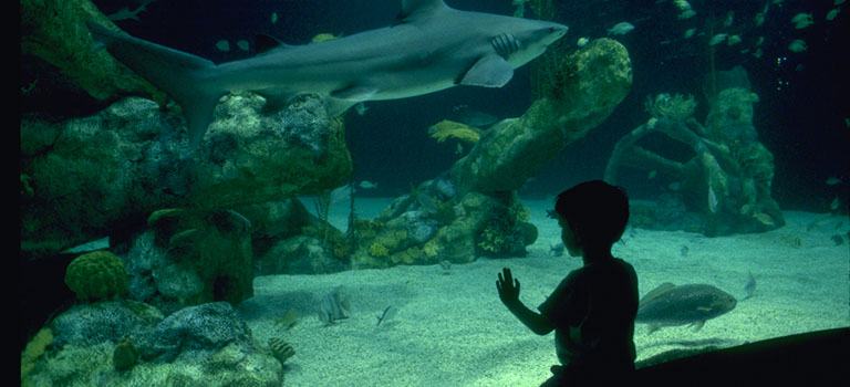 Aquarium Overnight horiz.