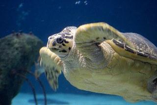 Aquarium Overnights thumb