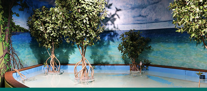 Aquarium Mangrove Touch Pool