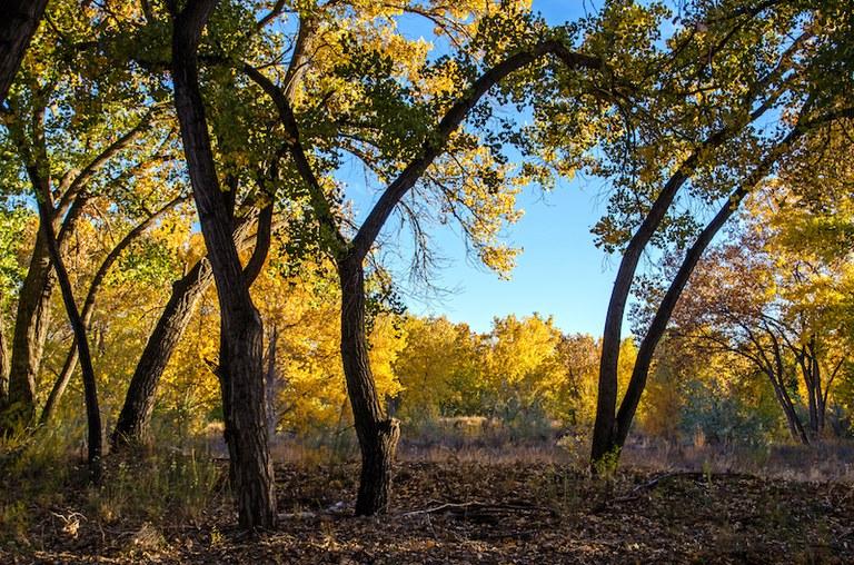 Fall in the Bosque, Dreamstime photo