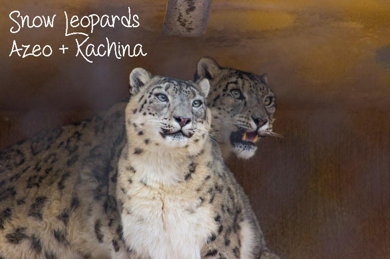Kachina and Azeo best couple