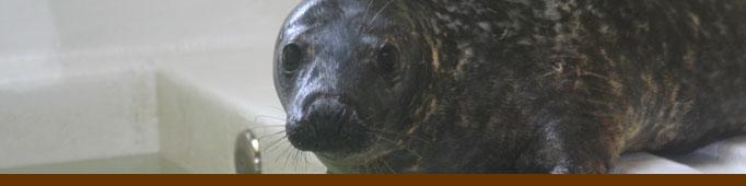 Banner Seal
